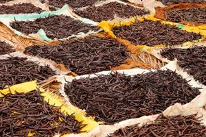 Vanilla-pods-collected-and-left-to-dry-on-the-sun-.jpg