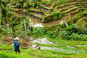 bali-rice-terraces-worker.jpg
