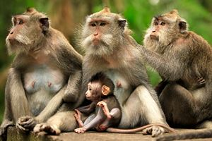 Family-of-monkeys.jpg