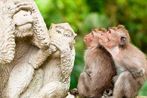 Long-tailed-macaques.jpg