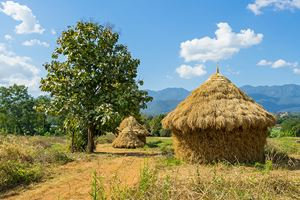 Harvesting-of-straw-looks-like-a-cottage-in-Pai.jpg