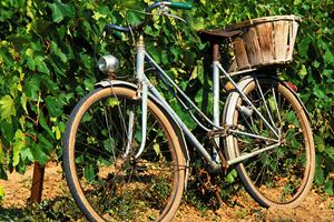 an-old-bike-rests-in-a-vineyard.jpg
