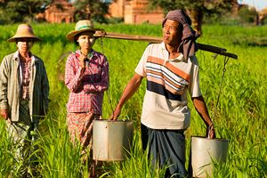 traditional-asian-farmer-coming-back-from-a-harvest-rice-field-in-bagan.jpg