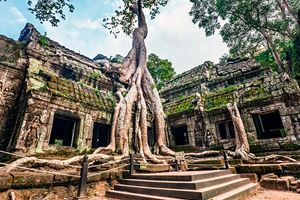 Classical-picture-of-Ta-Prohm-Temple,-Angkor.jpg