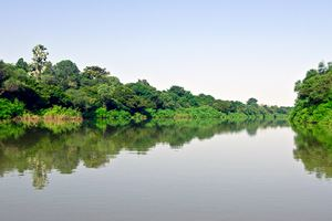 Gambia-Senegal-River-Forest-Jungle.jpg