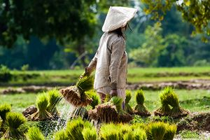 Farmer-on-the-field-in-Laos.jpg