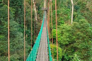 Canopy-walk-in-the-primary-rainforest,-Danum-Valley.jpg