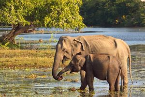 a-mother-and-baby-elephant-at-a-water-hole-in-yala-national-park-sri-lanka.jpg