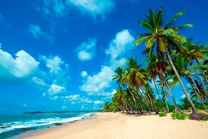 Untouched-tropical-beach-in-Sri-Lanka-(6).jpg