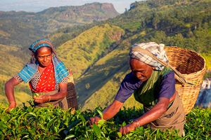 Women-tea-pickers-in-Sri-Lanka.jpg