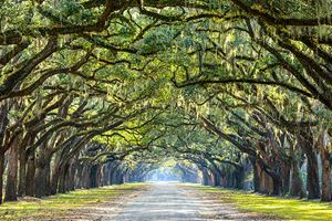 Savannah,-Georgia,-USA-oak-tree-lined-road-at-historic-Wormsloe-Plantation.jpg