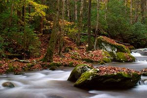 The-Great-Smoky-Mountains-roaring-fork-motor-trail.jpg