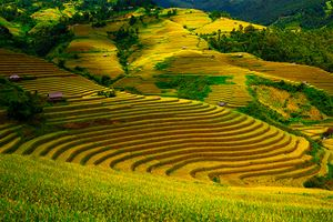 Gold-terraced-rice-fields-with-sunlight-in-Mu-Cang-Chai,-Vietnam.jpg
