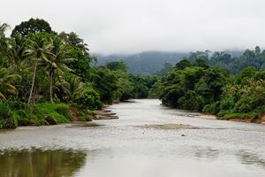 Wild-tropical-jungle-on-the-Borneo-island,-Indonesia.jpg