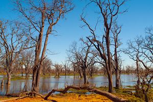 Flooded-forest-in-Okavango-delta,-Paradise-Pools,-Botswana.jpg